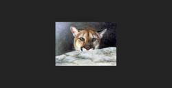 """""""Hide and Seek"""" - Cougar"""