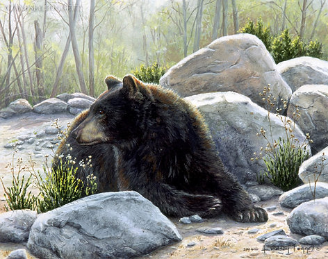 """Mountain Home"" - Black Bear"