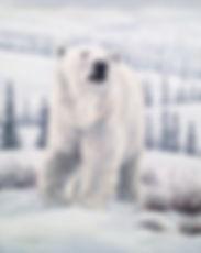 Polar Bear, Bear