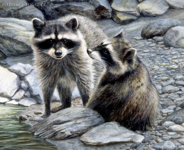"""Momentary Detour"" - Raccoons"