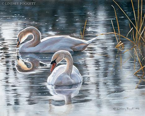 """Winter Light"" - Swans"