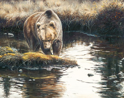 """""""The Opportunist"""" - Grizzly Bear"""