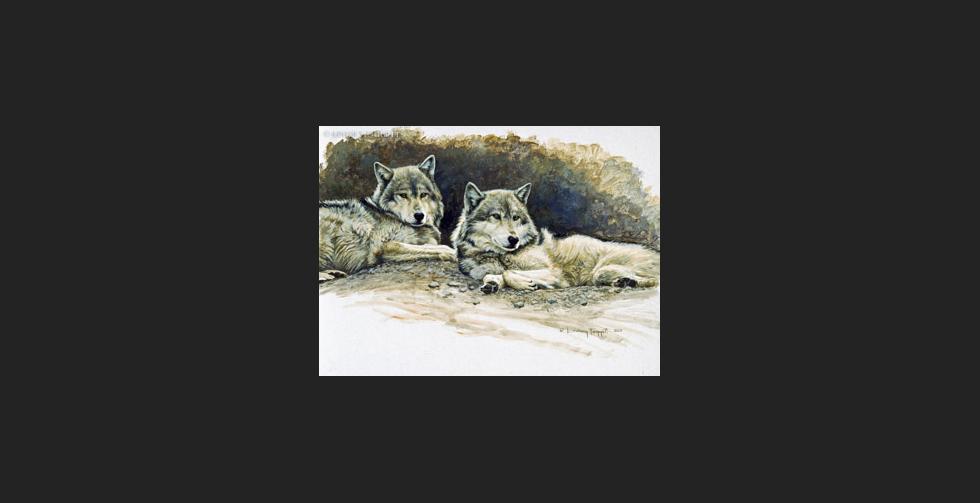 """Harmony Study"" - Wolves"