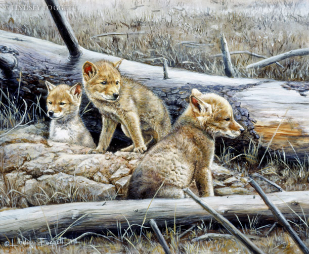 """""""Ready to Explore"""" - Coyote Pups"""