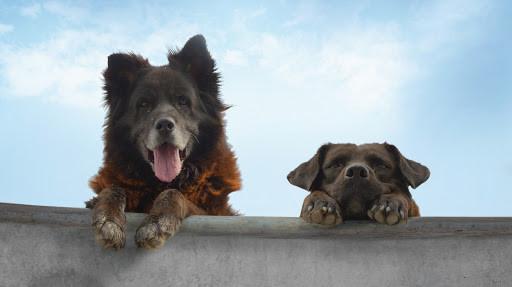 """""""Los Reyes"""": El documental de dos perritos de la calle se puede ver gratis en Ondamedia"""