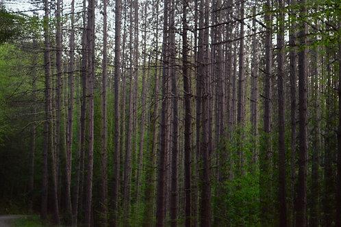 Dizzy Forest