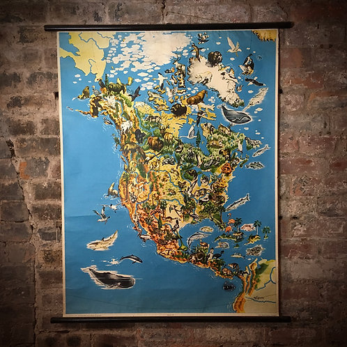 Large Georg Westermann Vintage map. North America. Wild animals and Vegetation.