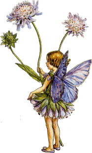 fairytallflowers_edited.png