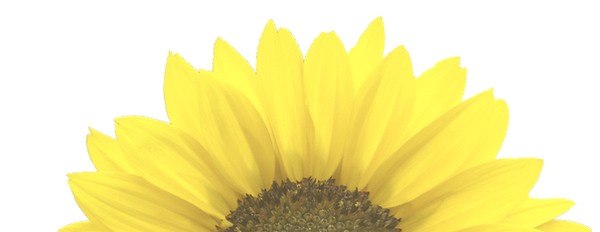 sunflower-png-11_edited_edited_edited_ed