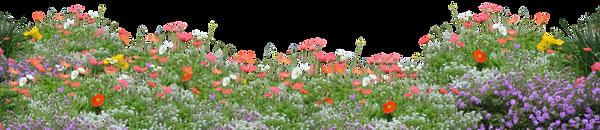 base flower.png