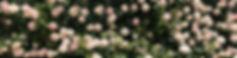 384D5C06-E459-4E29-8E47-8FEBBCF491E6.jpe