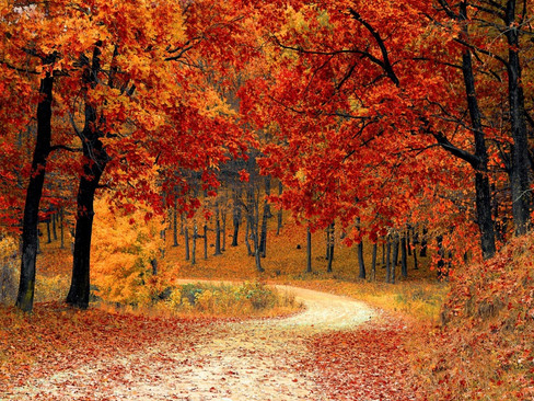 Organise Your Mind This Autumn