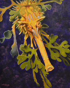 'Puff' the Leafy Sea Dragon