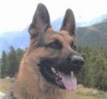 wolfsgruebler04