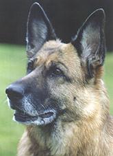 hunde02.jpg