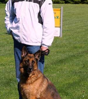 Jean und Nyra an der Landessiegerprüfung für Fährtenhunde
