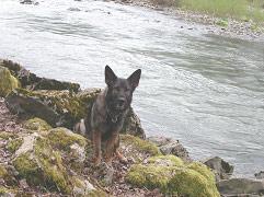 wolfsgruebler16