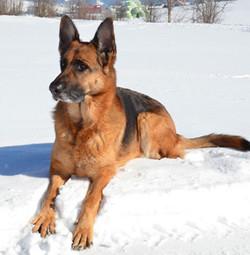 Laica,-Schnee-Febr.-12