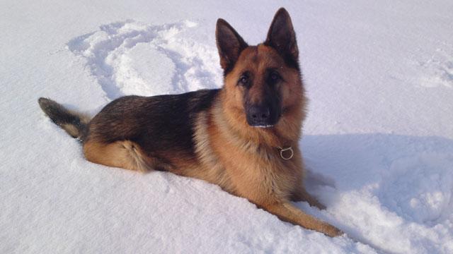 Qiuma,-Schnee,-Febr.-12