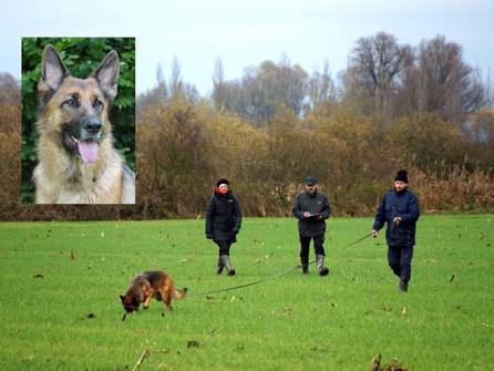 Wolfsgrübler erneut erfolgreich an der Herbstprüfung in Radolfzell
