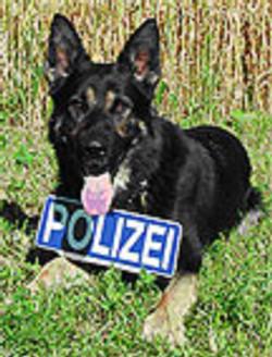 wolfsgruebler25
