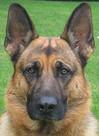 hunde08.jpg
