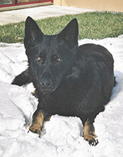 wolfsgruebler12
