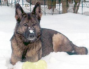 wolfsgruebler03
