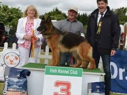Jean als Show-Richter an der Internationalen Schäferhundeausstellung in Dublin (Irland)