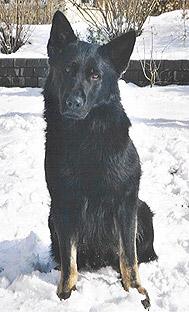 wolfsgruebler11