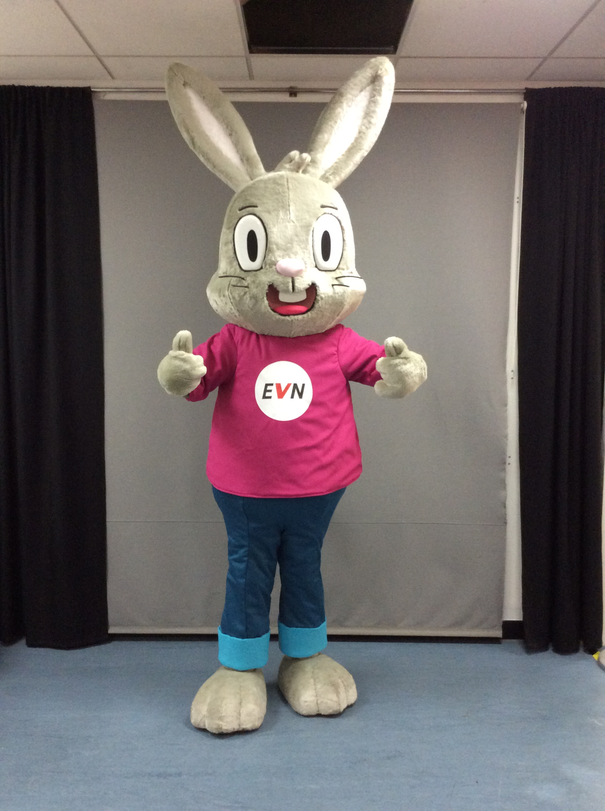 EVN bunny