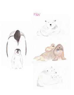 Polar Collection