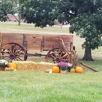 Fall Gardens and Fun