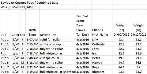 Puppy Data from AM CH STREAMLINE'S LET'S START THE INSANITY ex AM CH MAXWELL'S DOCK OF THE BAY