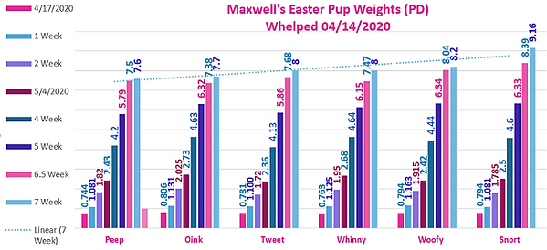 All Pups Data from AM CH STREAMLINE'S OUTNUMBERED ex AM CH MAXWELL'S ACROSS THE POND