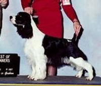 Am Ch Streamline*s Black Onyx, CGC, Delta Pet Therapy