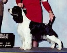 AM CH STREAMLINE'S BLACK ONYX, Delta Pet Therapy Dog, CGC