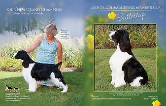 AM GCH CH / CANADIAN CH MAXWELL'S BUILD ME UP BUTTERCUP