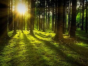 Die 5 größten Irrtümer über das Waldbaden