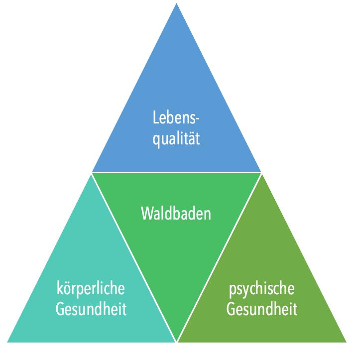 3 Wirkungsbereiche von Waldbaden