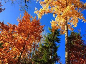 Drei achtsame und lustvolle Naturerlebnisse für den Herbst