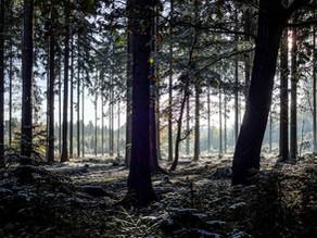 Drei achtsame und lustvolle Naturerlebnisse für den Winter