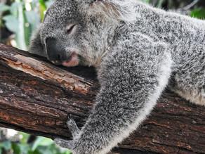 5 goldene Tipps für richtig guten Schlaf