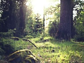 Was bringt Waldbaden? 10 erstaunliche Wirkungen, die wir uns alle wünschen