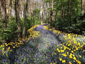 Drei achtsame und lustvolle Naturerlebnisse für den Frühling