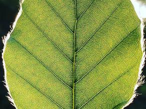 5 Gründe, warum Achtsamkeit in der Natur so einfach und wirkungsvoll ist