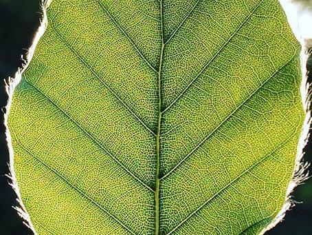 Warum Achtsamkeit in der Natur so einfach und wirkungsvoll ist
