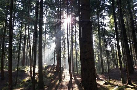 Glückwärts Waldbaden