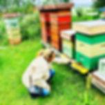 Besöker bikuporna i Bollnäs (Hälsingland)