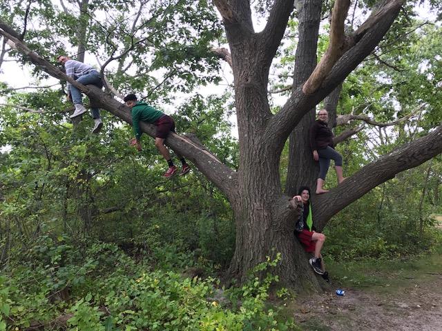 climbing tree 3
